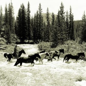 Bruno Engler-Horses Crossing Brewster Creek
