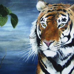Dione Dolan-Tiger