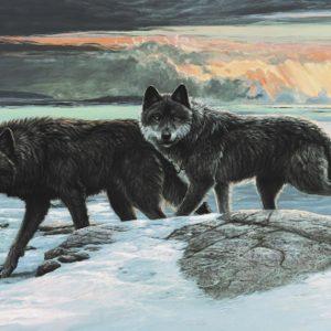 Lissa Calvert-Black Wolves
