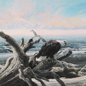 Lissa Calvert-Eagle on Driftwood