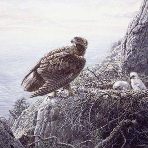 Lissa Calvert-Golden Eagle