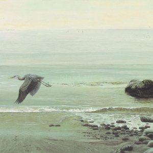 Lissa Calvert-Great Blue Heron