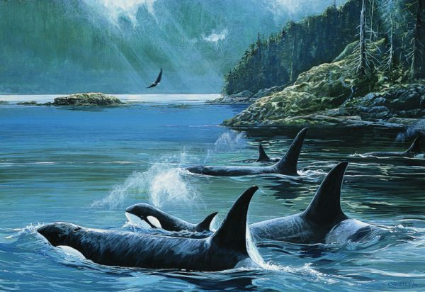 Lissa Calvert-Killer Whales