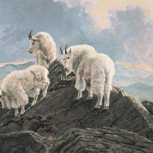 Lissa Calvert-Mountain Goats