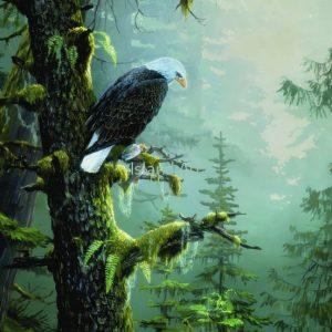 Mark Hobson-Bald Eagle Morning Catch