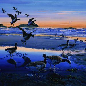 Mark Hobson-Black Brant Geese