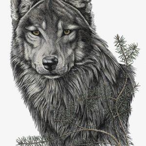 Stefanie Clark-Timber Wolf