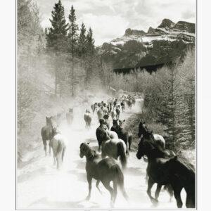 Bruno Engler Horse Drive poster