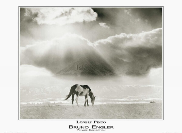 Bruno Engler Lonely Pinto poster